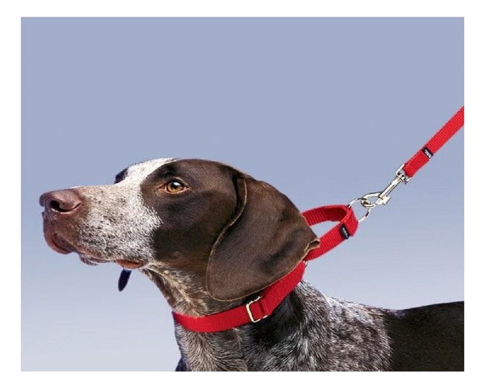 collier pour votre chien