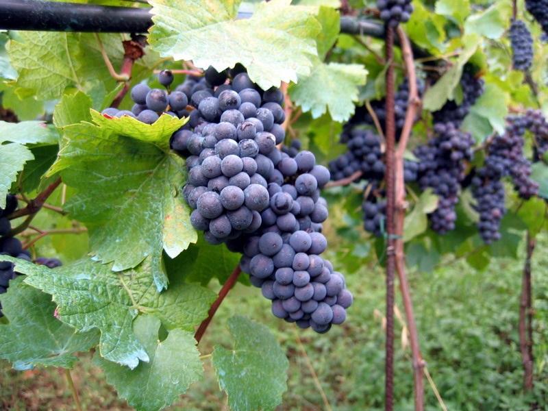 vente d'un domaine viticole dans le Languedoc